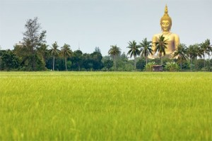 Golden Buddha statue ar rice field in Thailand.