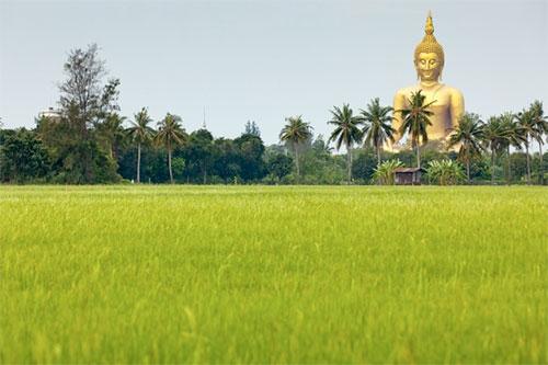 Golden Buddha statue ar rice field in Thailand.
